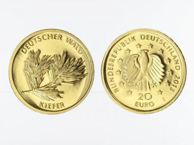 BRD 20 Euro Gold, 2013 D,  Deutscher Wald Kiefer